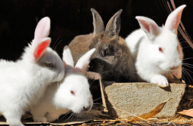 What is Animal Testing?